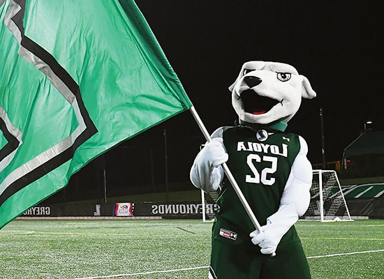 The Loyola Greyhound mascot waves a flag during a night game