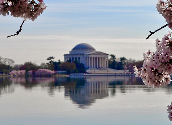 Cherry blossoms in the foreground and the Thomas Jefferson Mem要么ial in the background across the Tidal Basin